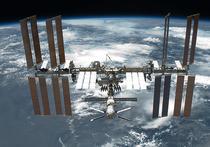 Завезённые на Международную космическую станцию астры-цинии недавно проросли, и их ростки оказались более крупными, чем обычно бывают у этих декоративных комнатных растений на Земле