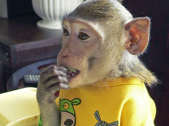 Участник детского новогоднего шоу в «Олимпийском» подвергся нападению обезьян