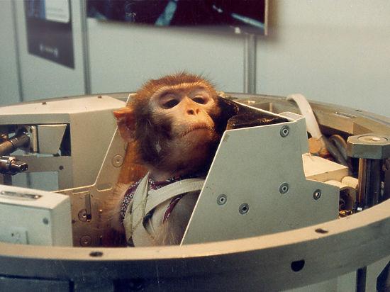 Красная обезьяна до красной планеты доведет: тайны работы животных-космонавтов