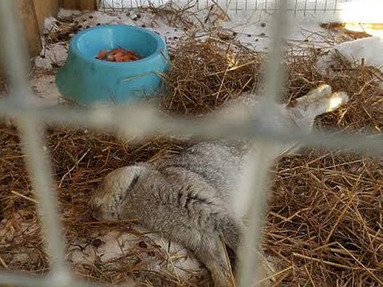 Сотрудники зоопарка: «Кролик умер не от мороза, а от стресса»