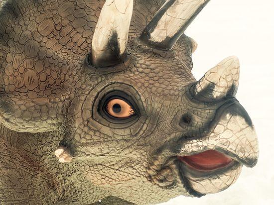Палеонтологи уточнили представления динозавров о сексуальности