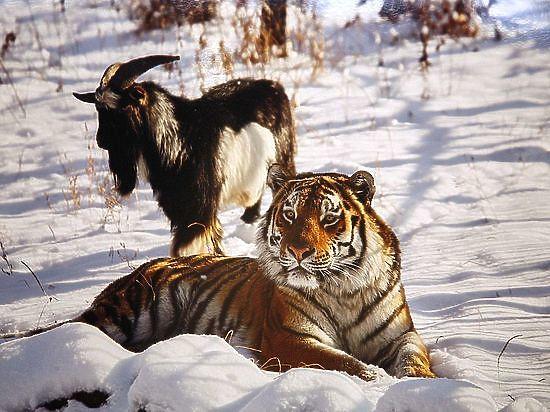 Теперь есть две версии происхождения животного