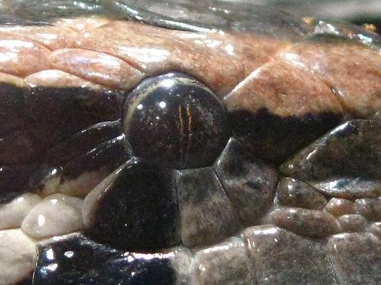 В Оренбургской области нашли пятипалого ящера