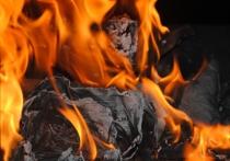 Десять кошек, собака и их хозяйка-пенсионерка сгорели заживо в Подмосковье