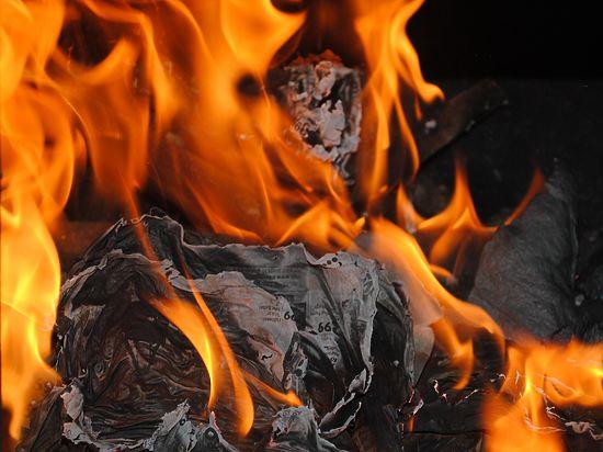 Десять кошек и собака погибли при пожаре в Подмосковье