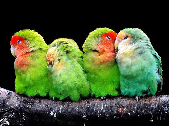Что нужно знать, если вы хотите разводить птичек