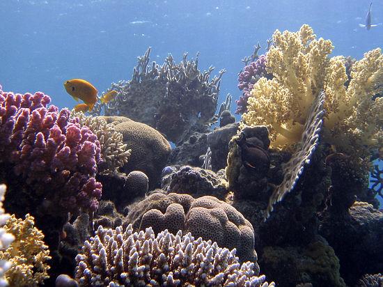 Кораллы теряют цвет из-за глобального потепления