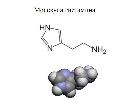 """Химики из МГУ написали """"портрет"""" аллергии"""