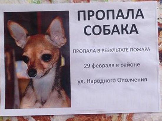 Семья убитой няней девочки ищет пропавшую во время трагедии собаку