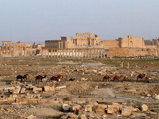 Археологи рекомендовали не восстанавливать Пальмиру после освобождения от исламских боевиков