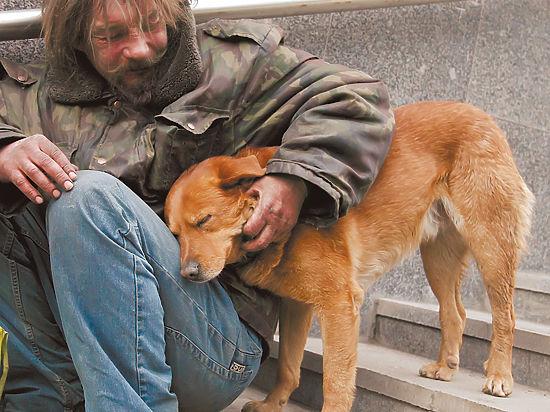 Собака защищала замерзшего хозяина от врачей