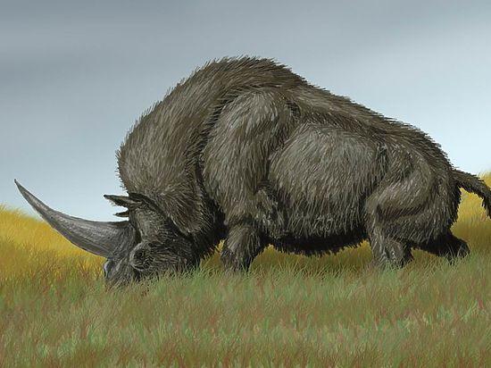 30 тысяч лет назад рядом с людьми жили единороги