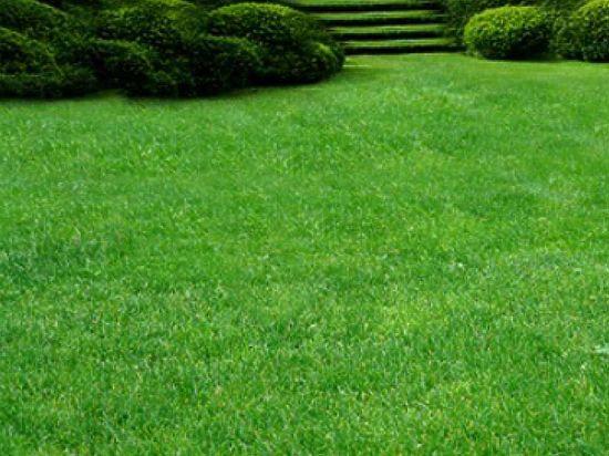 Любой садовод-любитель, как и профессиональный ландшафтный дизайнер, знает, что успешная основа в озеленении участка - это плодородный грунт