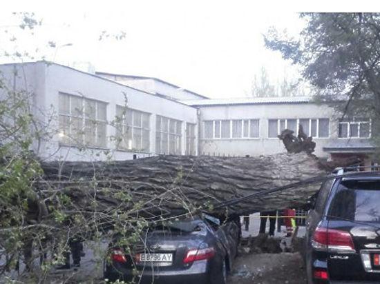 Увидели трухлявое дерево — звоните в мэрию