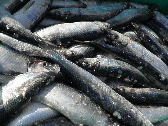 Стоимость рыбы, икры и морских деликатесов резко выросла в Москве за март