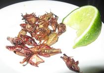 Заменять мясо насекомыми в России пока не планируют