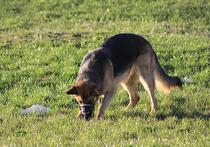 Сенсационная новость пришла из подмосковных Химок — собака местной жительницы во время прогулки нашла антикварную книгу Александра Пушкина