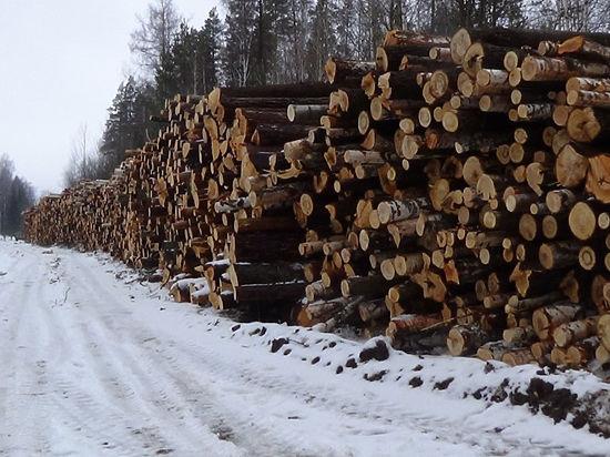 Незаконная вырубка  на земле «Росатома»? Новоуральский лес превратили  в «казахскую степь»