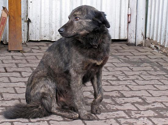У «Эко Вешняков», где произошла массовая драка с участием зоозащитников и охранников, и раньше была плохая репутация среди волонтерской общественности