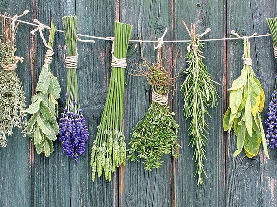 Какие растения употреблять в пищу