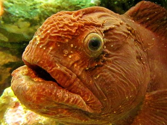 Рыбы, пристрастившиеся к поеданию пластика, напугали ученых