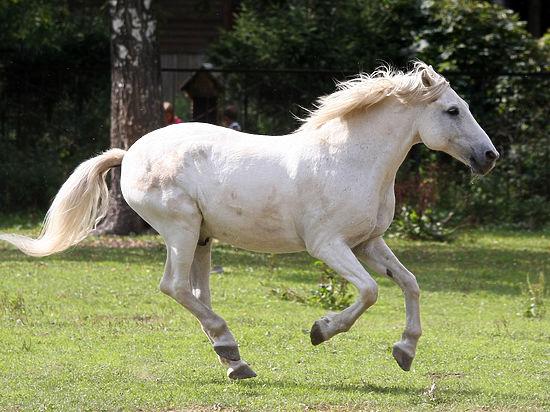 Конь протащил школьницу по грунтовой дороге