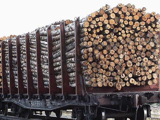 Спекулянты встретили «в штыки» первый честный аукцион по  лесу в Приангарье