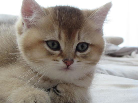 Кошки заражают людей паразитами, превращая их в яростных зомби
