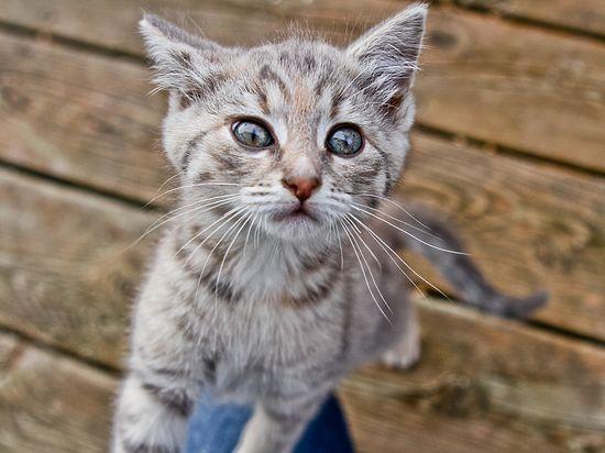Способность кошек предсказывать будущее подтверждена научно
