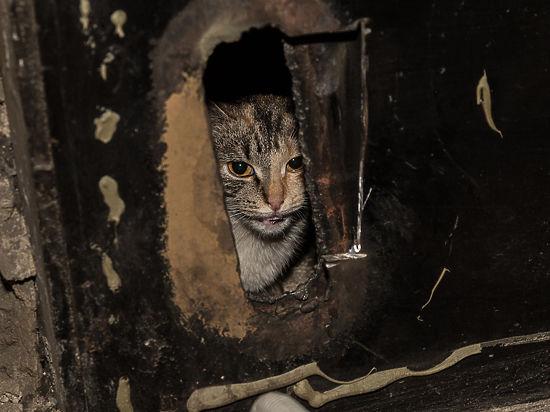 В какие чрезвычайные ситуации попадают животные в большом городе