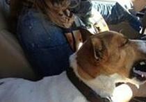 Любимая собака певицы Жанны Фриске погибла под колесами автомобиля