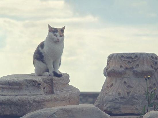 Найден древнейший в России античный храм