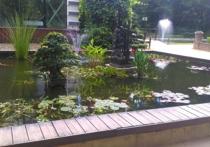 Ценные рыбы осетровых пород похищены в Ботаническом саду МГУ «Аптекарский огород»
