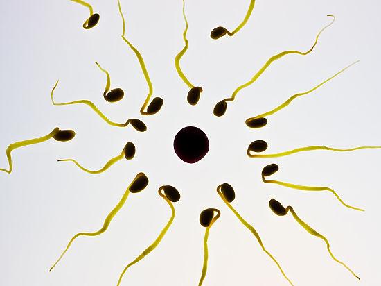 В семени мужчины миллионы сперматозоидов и именно их я имею в виду