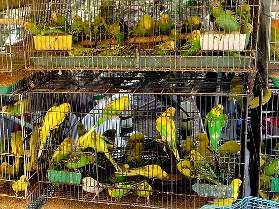 В России растет спрос на гуппи и попугаев
