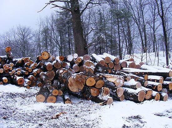 льготный лес на строительство