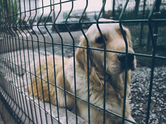 А для тех, кто не следит за собаками-охранниками, хотят ввести уголовную ответственность