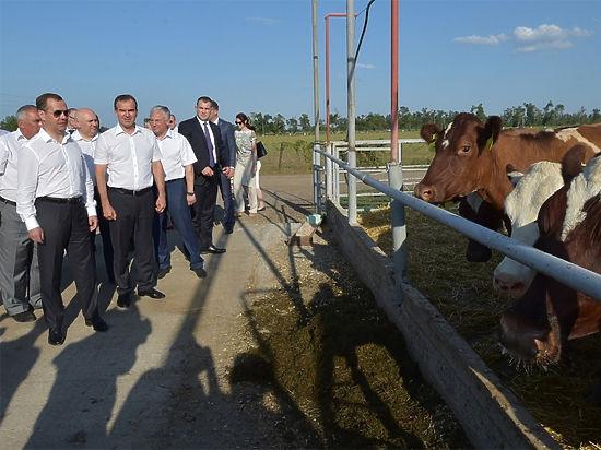 Премьеру показали идеальное животноводческое хозяйство, в котором буренки слушают Стаса Михайлова и питаются натуральными кормами