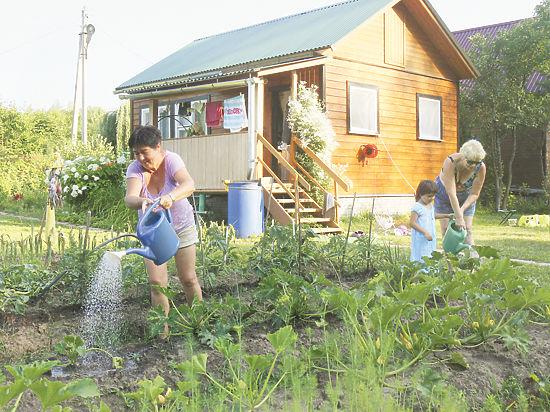 Правительство готовится перекроить устаревший с 1998 года закон «О садоводстве, огородничестве и дачном хозяйстве»