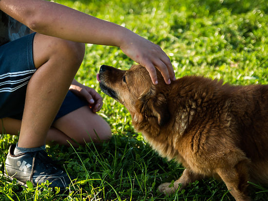 Мифы о бездомных собаках