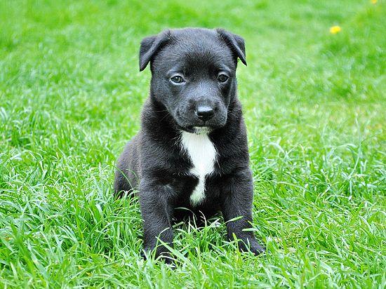 Собак очеловечат в документах: для них разрабатывают свидетельства о смерти