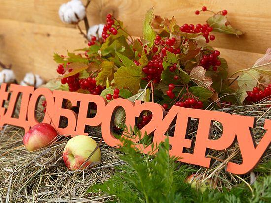 «Вовка-морковка»: праздник семьи, благотворительности, спорта и творчества