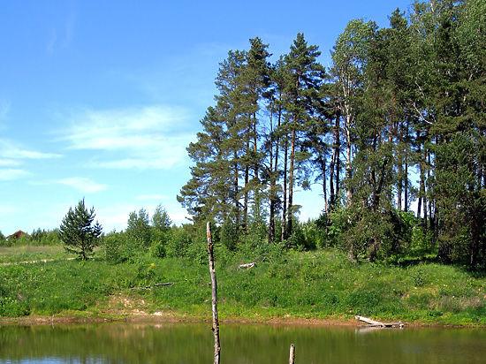 «Единая Россия» обеспечит контроль застройки лесов