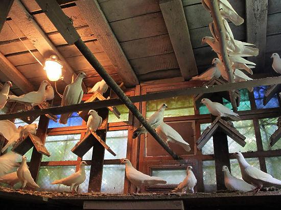 Клуб голуби москва есть клуб в москве где трахаются