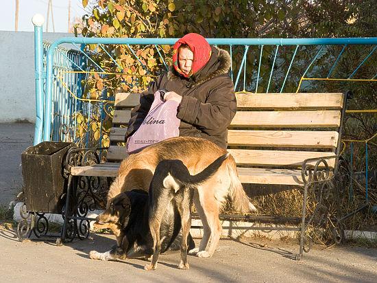 Безумная любительница животных травит соседей собачьей мочой