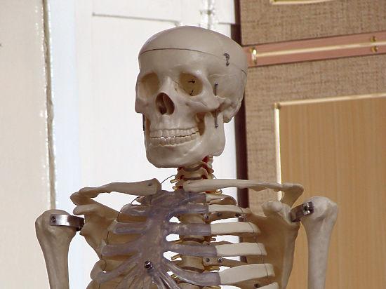 Укреплять скелет будут полиэтиленом: открытие российских ученых
