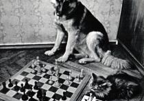 Героями наших шахматных историй в основном являются гроссмейстеры и гроссмейстерши