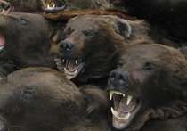 12 сентября в Якутии зверь расправился с сотрудником алмазодобывающего предприятия, который вышел за территорию вахтового поселка