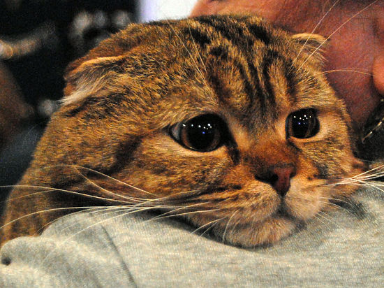 Американские ученые утверждают, что кошки опасны для здоровья