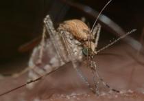Некоторые комары предпочитают кусать людей, в то время как другие того же вида отдают предпочтение крупному рогатому скоту